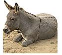 Donkey Cardboard Cutout Standup Prop