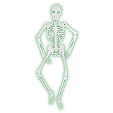 Mr. Bones-A-Glo Skeleton 5'